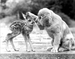 kindness golden and fawn