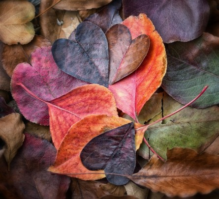 beautiful leaves. positively positive. self love.