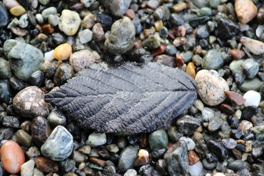 black leaf in sand and gravel beach