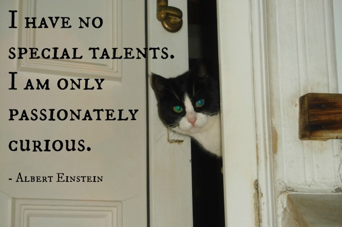 passionately curious. einstein